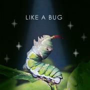 虫っぽい生き方