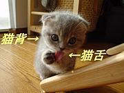 猫舌&猫背にゃんです