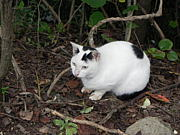 個人猫ボラ助け愛