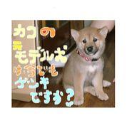 カコ【モデル犬】里親族