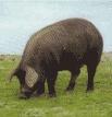 イベリコ豚とハモンイベリコ
