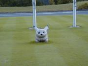 東京工業大学 ゴルフ部