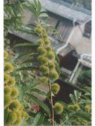 果樹や野菜・花の新品種の育種
