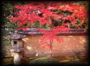 京都の紅葉巡り