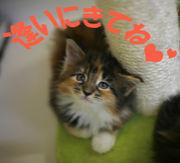仔猫アルバム=^・・^=