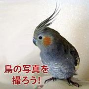 鳥の写真を撮ろう!