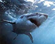 怖いけどサメが好き(´・ω・')