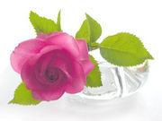 開放された薔薇の館