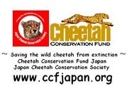 チーター保護基金ジャパン/CCFJ