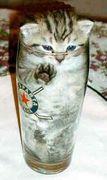 悪の猫結社