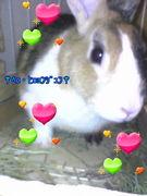 ウサギ様w