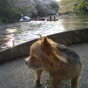 井の頭公園の犬達