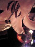 花×色×音  時々、匂い