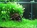 My Aquarium Tank