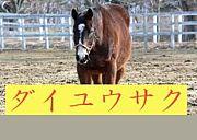日本穴馬党