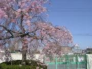 磯島小学校