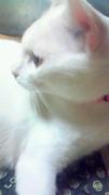 猫好き集まれぇ〜=^・ω・^=☆