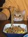 ネコ好きbutネコアレルギー