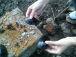 淡水二貝達!カラス貝、ドブ貝