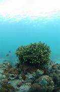 竹ヶ島自然再生プロジェクト
