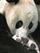 上野動物園のパンダLOVE