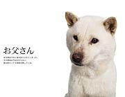 北海道犬 カイくん