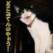 般若猫 −ハンニャネコ−