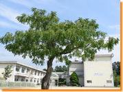 豊田市立根川小学校