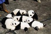 パンダ集まれ!!
