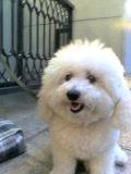 青山ピーコック前の「犬」