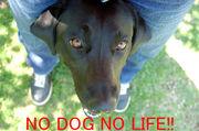 NO DOG NO LIFE