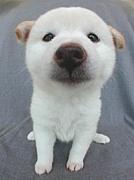 犬が大好き!!