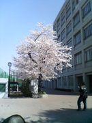 戸山高校  2007年卒