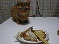 茶トラの猫が好き!