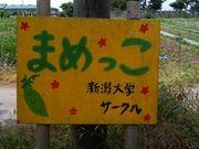 まめっこ in 新潟