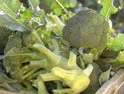 brocco!!