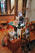 cat cafe RIEN