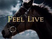 FEEL LIVE