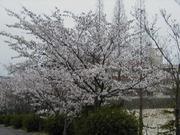 瀬戸市立本山中学校