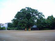 幼稚舎 91KEO