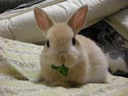 気絶するほどウサギが好き。