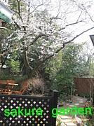 カフェ桜garden