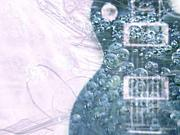 hakodate guitar society
