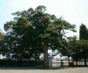栃木市立国府北小学校