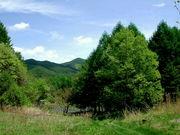 信州南相木村で自然体験