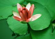 慈悲の瞑想