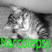 ナルコレプシー