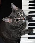 たまにはピアノを弾く会