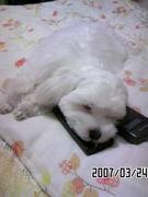 眠りたいのです。