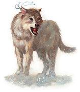 宮大工とオオカミ様